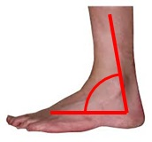 an angle in an ankle
